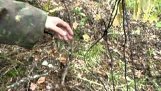 ловля боровой дичи петлями видео