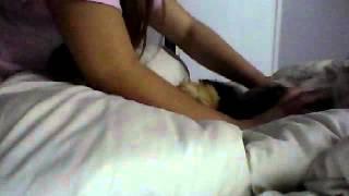 guinea pigs :3