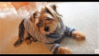 getlinkyoutube.com-Como hacer un sueter para perro tejido  a crochet