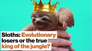 Sloths: Evolutionary losers or the true king of the jungle? | Lucy Cooke width=
