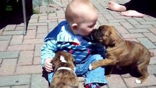 Funny Baby & Animal Videos beautiful Compilation