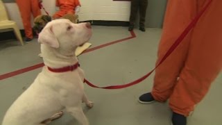 Inmates and dogs train and bond in jail