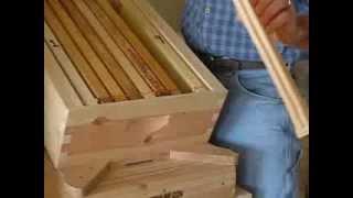 getlinkyoutube.com-Holistic beekeeping by beez4life.com