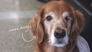 getlinkyoutube.com-Houston's Official Therapy Dog, Angel