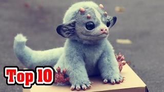 getlinkyoutube.com-Top 10 Most Unusual Extinct Animals