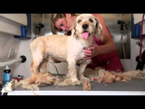 Come salvare un cane abbandonato animali dal mondo - Portare il cane al canile ...