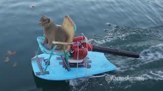 getlinkyoutube.com-Homemade Jet Ski - Aarons Animals