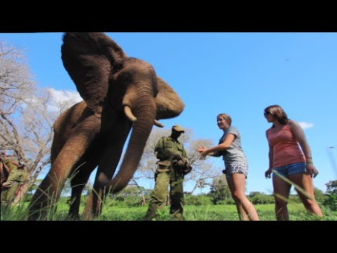 living with elephants in victoria falls