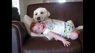 getlinkyoutube.com-สุนัขแสนรู้ กับเด็ก รวมคลิป น่ารักๆ Bayby And Dog