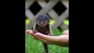 getlinkyoutube.com-Самые маленькие животные в мире