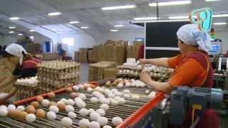 """getlinkyoutube.com-ТВ программа """"Бизнес с нуля"""": 2 сезон, 12 серия (22) Яйца"""