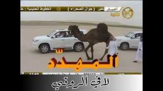 getlinkyoutube.com-الفحل المهدد وانتاجه - للمالك حمد الصياح المري -الصحراء