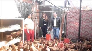 getlinkyoutube.com-PROYECTO GALLINAS PONEDORAS - HY LIVE BROW - CBA MOSQUERA