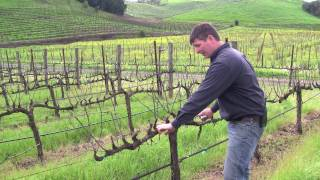 getlinkyoutube.com-Vineyard Management - About Our Vines