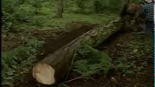 Horse Logging - Merve Wilkinson's Wildwood Forest