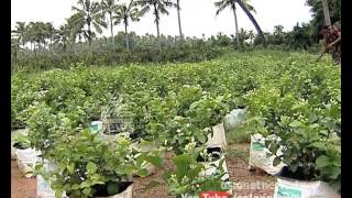 getlinkyoutube.com-Money Time 6th Aug 2015|Sucess story of Jasmine Farming