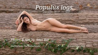 Populus logs