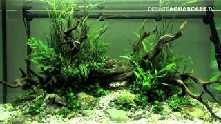getlinkyoutube.com-Aquascaping - The Art of the Planted Aquarium 2012, part 2