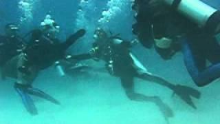 getlinkyoutube.com-Panicking Diver Gets Violent!