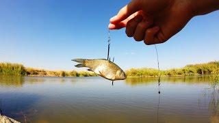 getlinkyoutube.com-Насаживание живца на крючок для ловли щуки.Рыбалка.Fishing