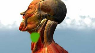 getlinkyoutube.com-pressure points of the neck.