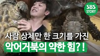getlinkyoutube.com-TV동물농장 공룡의후애 악어거북111001_clip7