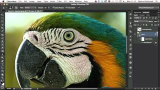 A Look at Various Sharpening Techniques in Photoshop