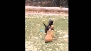 Furkids/Small Dog Rescue - Dovie