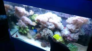 getlinkyoutube.com-How coral and Live rock grow into each other
