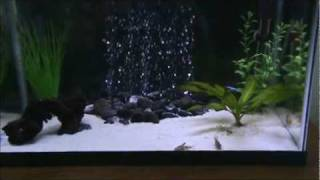 How to reduce noise from your fish tank