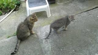 getlinkyoutube.com-Horny Gay Cat