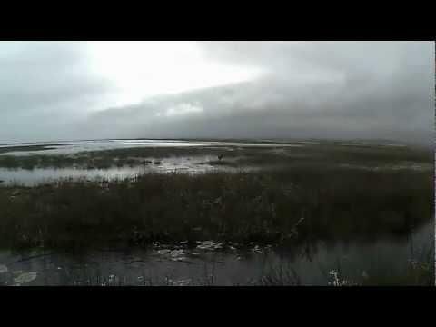 Cacería de Patos / Duck Hunting con Braco Peru 2012