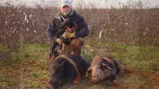 getlinkyoutube.com-Hog Hunting with Jagd Terriers and Curs ( Volume #1 )