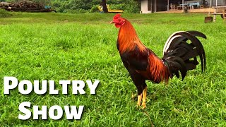 Bloodlines at the World Gamefowl Expo