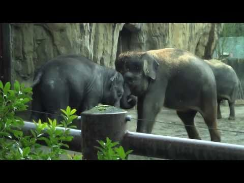 CUTE BABY ANIMALS PLAYING! (BABY ELEPHANT, COUGAR, & BEAR)