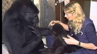 getlinkyoutube.com-A Conversation With Koko