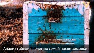 getlinkyoutube.com-Почему гибнут пчёлы