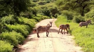 Lake Manyara National Park - SAFARI TANZANIA 2016