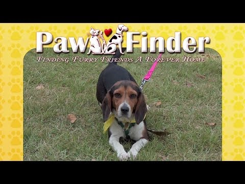 Furry Friend Finder