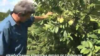 Atemóia ganha espaço na região de Catanduva