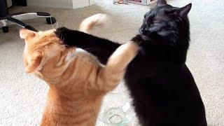 Dos gatos y sus tiernas peleas