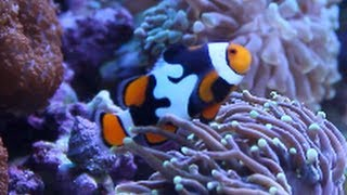 getlinkyoutube.com-Amazing Aquariums & Reefs - California [Local Fish Store Travel Ep. 7]