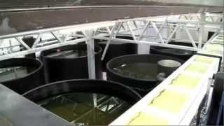 getlinkyoutube.com-Aquaponics - Fish and Veggie Farming in Berlin