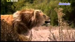 getlinkyoutube.com-حيوانات منقرضة - ذوات الاسنان السيفية (ماقبل التاريخ)