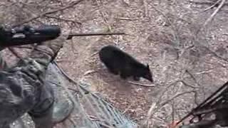 getlinkyoutube.com-When Bears Go Wild
