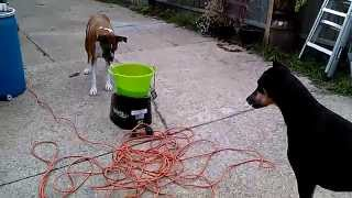 getlinkyoutube.com-why I sold the Dog ball launcher, launching tennis balls - Go dog Go