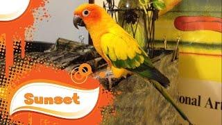getlinkyoutube.com-Basic Bird Care & Cage Maintenance Routine - Sun Conure Cockatiel Parrot