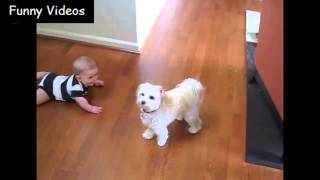 getlinkyoutube.com-Babies And Dogs - Funny Videos 2015