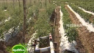 getlinkyoutube.com-Hi-Tech Farming in open field  by a group of farmers in wayanad : Success Story