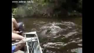 getlinkyoutube.com-Sucuri tenta atacar o barco